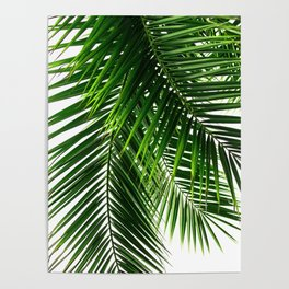 Palm Leaves #3 Poster