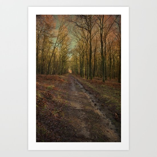 Winter Beech Woodland Art Print