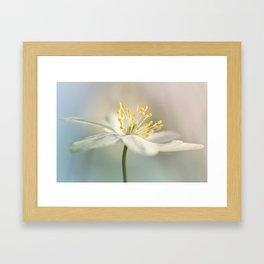 Loveable Wood Anemone... Framed Art Print