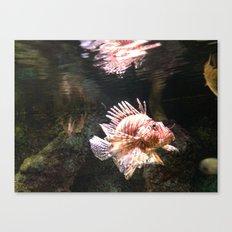 fish love Canvas Print