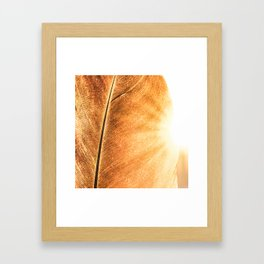 California Gold Framed Art Print