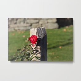 The lonesome rose Metal Print