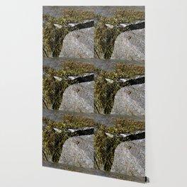 Nature's Mossenger Wallpaper