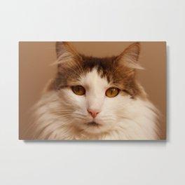 Ragamuffin Cat Portrait Metal Print