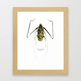 Acrocinus II Framed Art Print