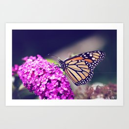 Butterfly Dreams Art Print