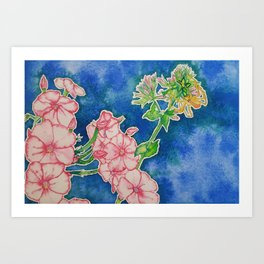 Sweet Spider and Phlox Art Print