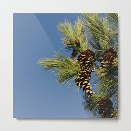Pine cones and branches against a blue autumn sky Metal Print