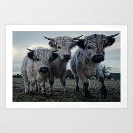 The Three Shaggy Cows Art Print