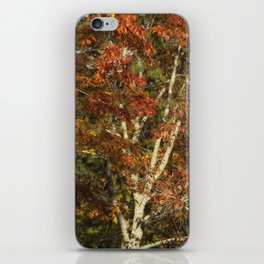 The Dying Leaves' Final Passion iPhone Skin