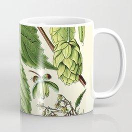 Humulus lupulus (common hop or hops) - Vintage botanical illustration Coffee Mug