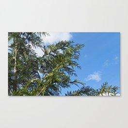 Sky through Cedar Canvas Print