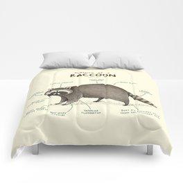 Anatomy of a Raccoon Comforters