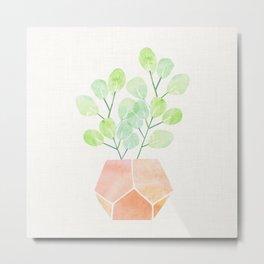 Bonsai Jade Plant Metal Print