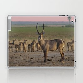The Waterbuck and his Ladies Laptop & iPad Skin