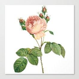 Vintage Pink Rose [07] Canvas Print