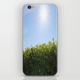 Summer Photos, Nature Photography, fine art gifts, Landscape Photo, sunshine photo iPhone Skin