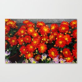 Chinese New Year Flowers Canvas Print