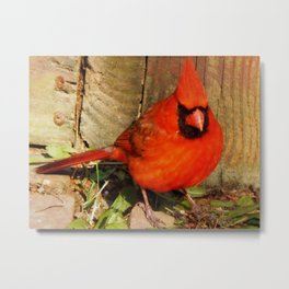 May your day be merry and bright! Metal Print