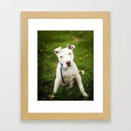 Pit Bull Puppy Framed Art Print