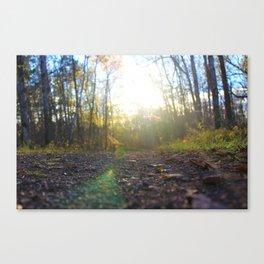 Sun Spot Forest Canvas Print