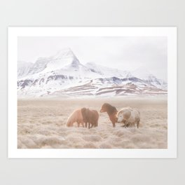 WILD AND FREE 3 - HORSES OF ICELAND Art Print