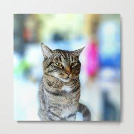 koko the cat blurry orig Metal Print