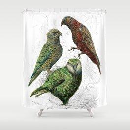 Three native parrots of New Zealand Shower Curtain