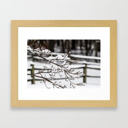 Snowy Branches Framed Art Print