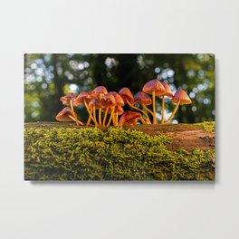 Mushrooms Growing On A Log Metal Print