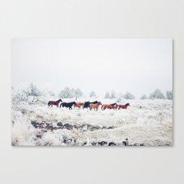 Winter Horse Herd Canvas Print