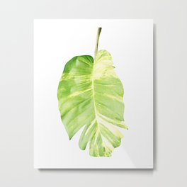 Philodendron bicolor Metal Print