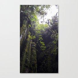 Winchead Cave Entrance I, Charleston, Buller, New Zealand Canvas Print