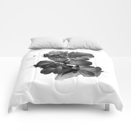 Black Geranium in White Comforters