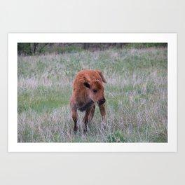 Baby buffalo calf Art Print