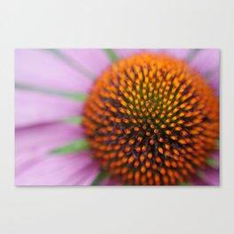 Cone Close Canvas Print