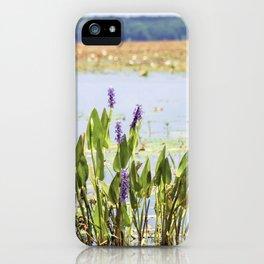 Florida Beauty 5 iPhone Case