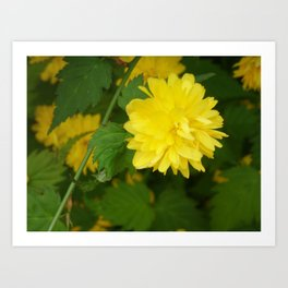 yellow flower Art Print