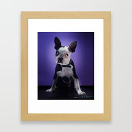 Super Pets Series 1 - Super Bugsy Framed Art Print