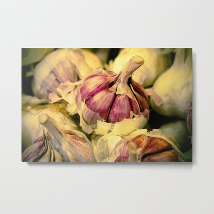 Close up of a garlic head with the teeth in the foreground. Metal Print