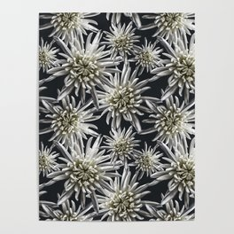 Mum Floral Pattern - Mum's the word - Black and White Floral Design - White Mum Flowers - I Love my Poster