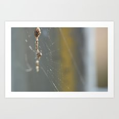 caught in the web Art Print