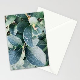 Evergreen Stationery Cards