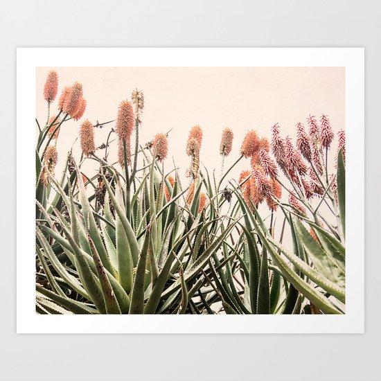 Cactus Blooms 2 Art Print