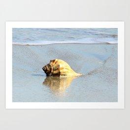 Beautiful Seashell Art Print