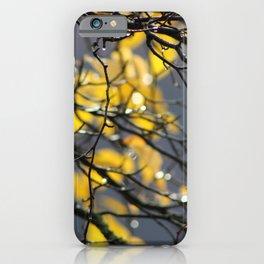 Yellow Birch Leaves, Raindrops, & Sunlight iPhone Case