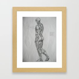 Muscle Anatomy II Framed Art Print