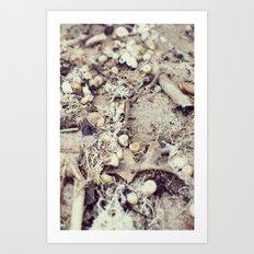 SandShells Art Print