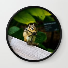 Chipmunk Chow Time Wall Clock