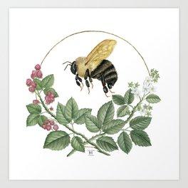 Bombus & Raspberries Art Print